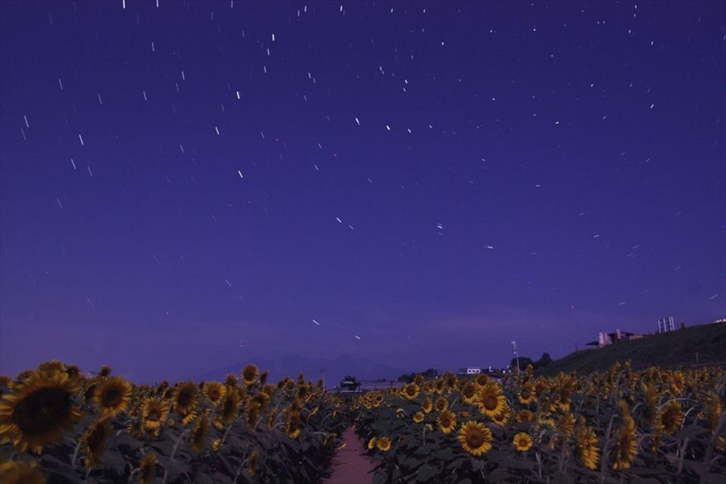 八ヶ岳を望む明野町ヒマワリ畑の星空 [The starry sky over a sunflower field in Akeno town viewing Mt. Yatsugatake]